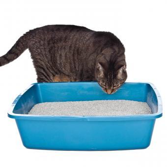 https://cf.ltkcdn.net/cats/images/slide/243244-850x850-2-smells-cats-hate.jpg