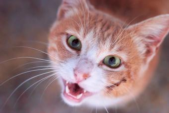Cat Skin Wounds and How to Treat Them