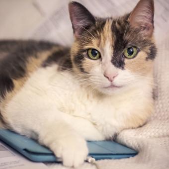 https://cf.ltkcdn.net/cats/images/slide/243819-850x850-manx-chilling-.jpg