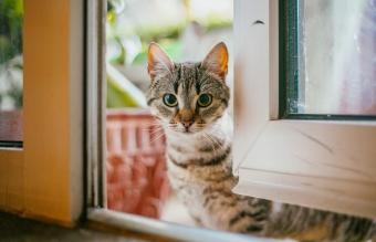 What to Do if You Find a Stray Cat
