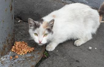 Portrait Of White Cat Eating