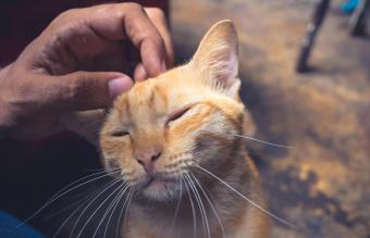 Caressing the head of cute cat