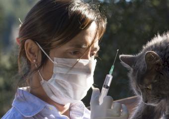Vet vaccinating a cat