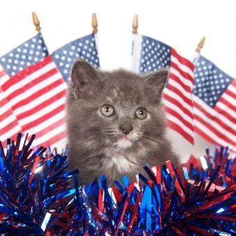 https://cf.ltkcdn.net/cats/images/slide/245222-564x564-fourth-of-july-kitten.jpg