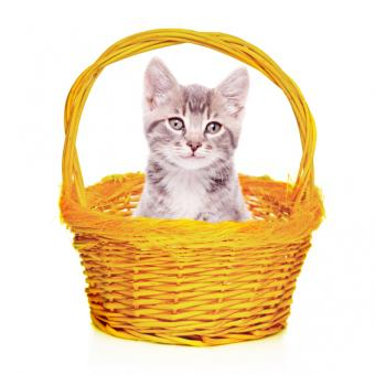 https://cf.ltkcdn.net/cats/images/slide/245223-565x565-gray-in-basket.jpg