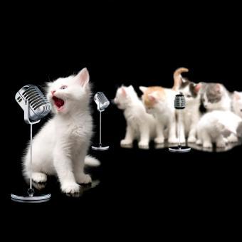 https://cf.ltkcdn.net/cats/images/slide/245233-850x850-kittens-singing.jpg