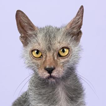 https://cf.ltkcdn.net/cats/images/slide/245234-850x850-werewolf.jpg
