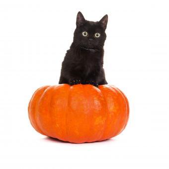 https://cf.ltkcdn.net/cats/images/slide/245235-850x850-cat-and-pumpkin.jpg