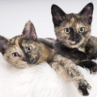 https://cf.ltkcdn.net/cats/images/slide/245236-850x850-two-kittens.jpg