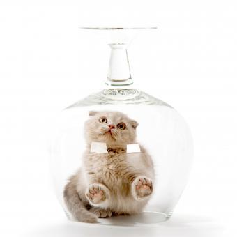 https://cf.ltkcdn.net/cats/images/slide/245239-850x850-cat-in-a-glass.jpg