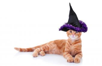Halloween witch pet cat in costume