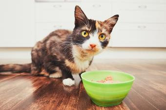 Cat with bowl of food