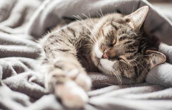 A cat sleeping in a blanket