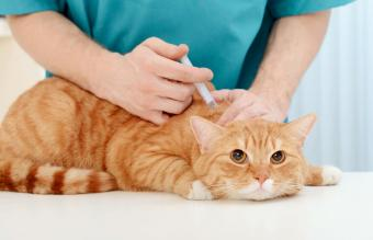 Rabies Vaccine Side Effects in Cats