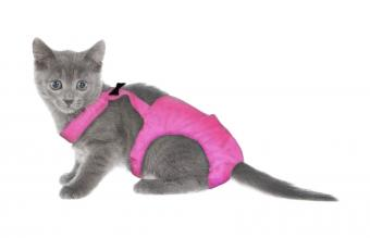 Does Your Cat Need Diapers?