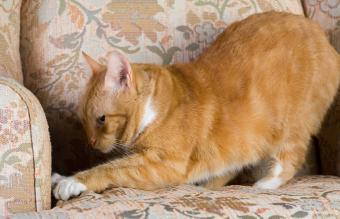Cat Scratching Deterrent