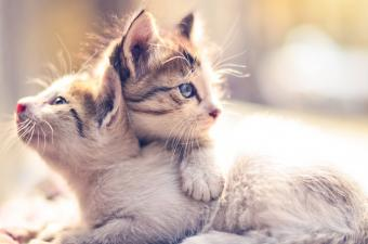 Should I Get a Male or Female Kitten?