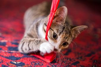Kitten playing with a ribbon