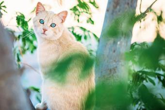 Light orange tabby cat