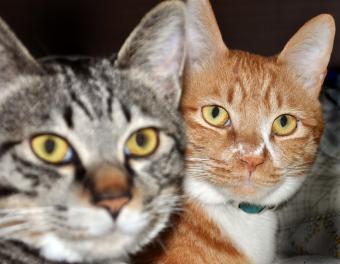 Tabby cat eyeliner