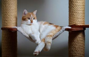 Cat lying in tree with hammock