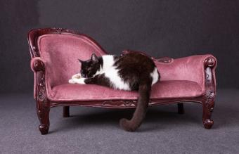Options for Luxury Cat Beds and Furniture
