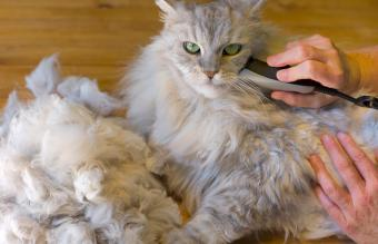 Matted Cat Fur Solutions