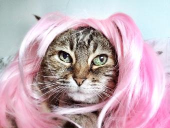 Cat wearing pink wig