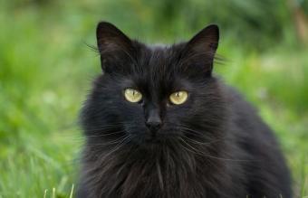 Portrait Of Black Cat Outdoors