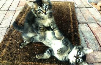 Close-Up Of Playful Kitten
