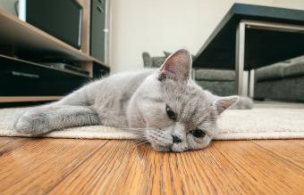 Is My Cat Depressed?