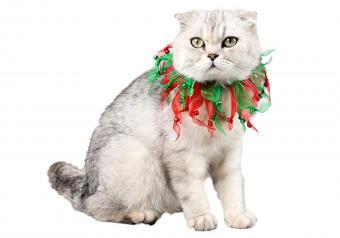 https://cf.ltkcdn.net/cats/images/slide/251977-850x595-7_Christmas_Elastic_Collar.jpg