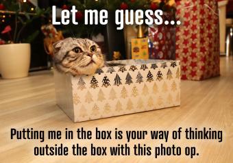 https://cf.ltkcdn.net/cats/images/slide/252015-850x595-2_Christmas_Cat_Box_meme.jpg