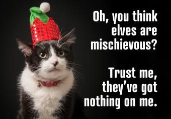 https://cf.ltkcdn.net/cats/images/slide/252017-850x595-4_Elf_Cat_meme.jpg