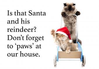 https://cf.ltkcdn.net/cats/images/slide/252029-850x595-12_kittens_cart_meme.jpg