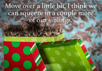 https://cf.ltkcdn.net/cats/images/slide/252030-850x595-13_3_kittens_present_meme.jpg