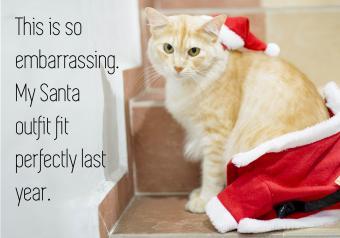 https://cf.ltkcdn.net/cats/images/slide/252081-850x595-15_Chubby_Cat_meme.jpg