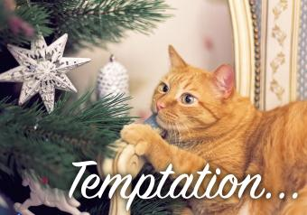 22 Funny Pictures of Christmas Cats