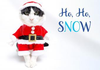 https://cf.ltkcdn.net/cats/images/slide/252087-850x595-1_Cat_Santa_Outfit_meme.jpg