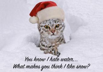 https://cf.ltkcdn.net/cats/images/slide/252088-850x595-3_Snow_Cat_Meme.jpg