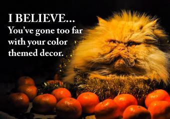 https://cf.ltkcdn.net/cats/images/slide/252089-850x595-5_Tangerine_Cat_meme.jpg