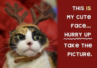 https://cf.ltkcdn.net/cats/images/slide/252090-850x595-7_Cat_Reindeer_Hat_meme.jpg