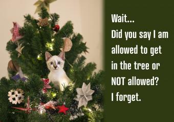https://cf.ltkcdn.net/cats/images/slide/252092-850x595-9_kitten_tree_meme.jpg
