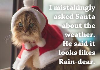https://cf.ltkcdn.net/cats/images/slide/252094-850x595-11_Cat_red_cape_meme.jpg