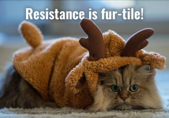 https://cf.ltkcdn.net/cats/images/slide/252097-850x595-18_Cat_Reindeer_costume_meme.jpg