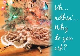 https://cf.ltkcdn.net/cats/images/slide/252098-850x595-19_Cat_under_Christmas_Tree_meme.jpg