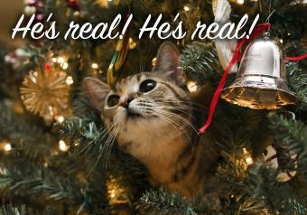 https://cf.ltkcdn.net/cats/images/slide/252101-850x595-20_Cat_Christmas_Tree_meme.jpg