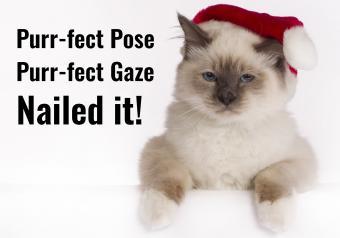 https://cf.ltkcdn.net/cats/images/slide/252106-850x595-21_Siamese_Cat_Santa_Hat_meme.jpg