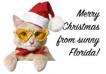 https://cf.ltkcdn.net/cats/images/slide/252107-850x595-22_Christmas_Cat_Sunglasses_meme.jpg