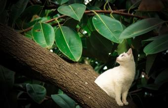 White cat on the tree